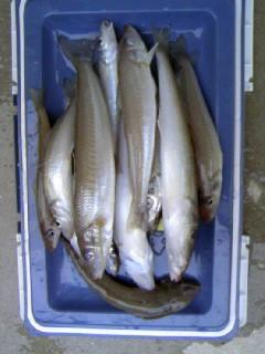 シロギス 佐賀県のシロギスの釣り情報 Gman.jp 投稿 ログイン 表紙 > 佐賀県
